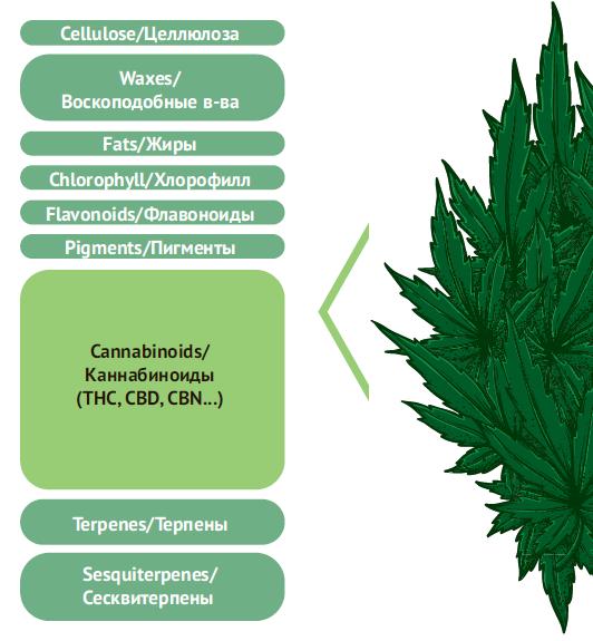 Химический состав каннабиса