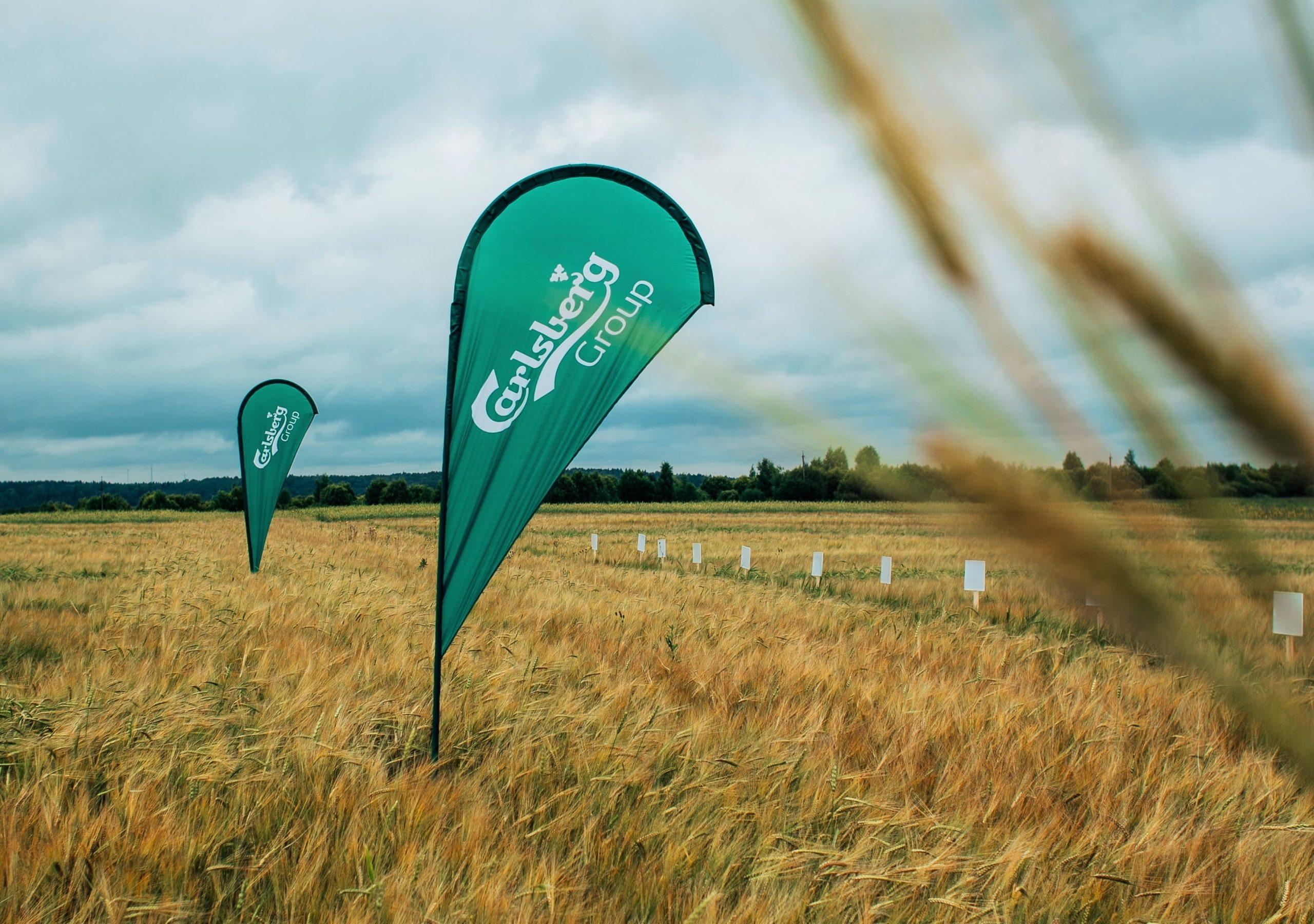 В 2020 году Carlsberg Group собрала 300 тысяч тонн ячменя в рамках агропроекта в России